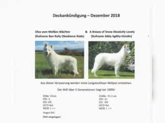 Weißer Schweizer Schäferhund - Deckankündigung