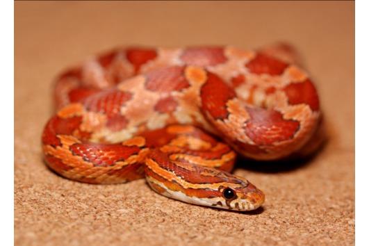 Reptilien Haltung Kleinanzeigen Kaufen Verkaufen Bei