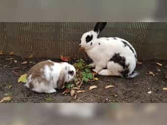 2 liebevolle Kaninchenbabys