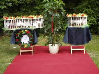 Hochzeitstauben Findest Du Auf Deinetierwelt