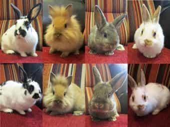 Kaninchenfamilie - Jungtiere - männlich frühkastriert und