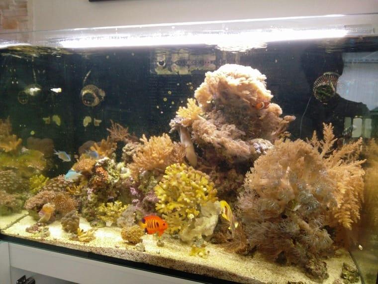 Aquarium 200l Komplett Mit Unterschrank Und Zubehör Fische & Aquarien