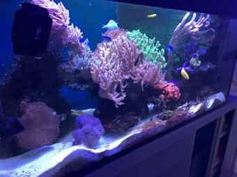 Meerwasseraquarium Technik und Inhalt