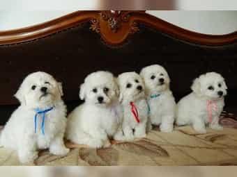 Hunde Aus Rumanien Von Seriosen Vermittlern Kaufen Deinetierwelt