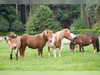 Ponys Und Kleinpferde Kaufen Verkaufen Deinetierwelt