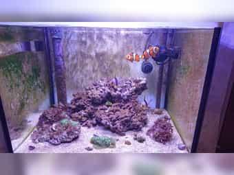 Meerwasseraquarium komplett inkl Technik