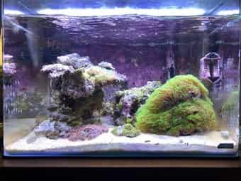 Meerwasser Aquarium Scapers Tank 55l