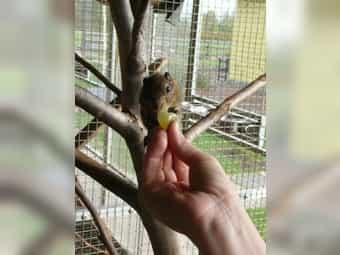 Junge Chinesische Baumstreifenhörnchen NZ 2019