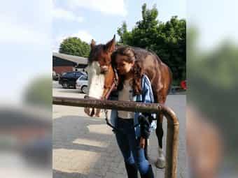 Pflegebeteiligung gesucht Mensch sucht Pferd