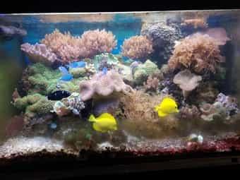 Meerwasseraquarium komplett abzugeben 400 liter