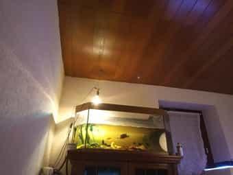 3 Wasserschildkröten mit 130cm Aquarium