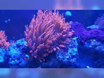 Meerwasser Aquarium Komplett Startet Paket