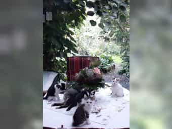 Handzahme Katzenbabies vom Bauernhof abzugeben