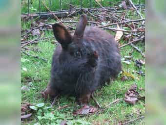 Franny - weiblich - ca 2-3 Jahre alt