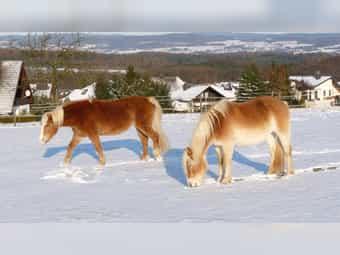 Einstellplatz Paddockplatz Offenstallplatz für Pony