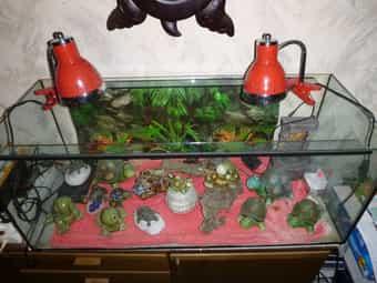 Terrarium Landschildkröten