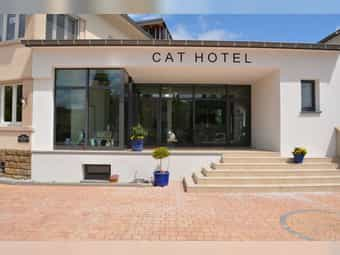 Cat sitting - CAT HOTEL Grossregion Trier