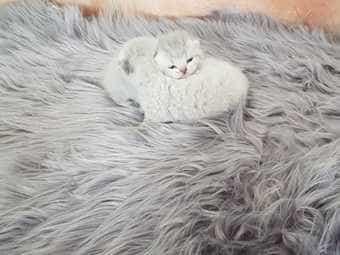Wunderschönes baby kitten