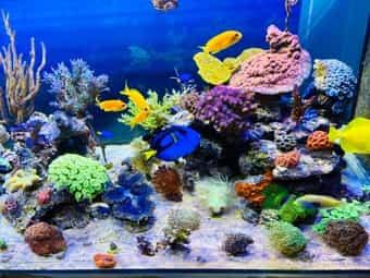 Bunte Korallenableger abzugeben