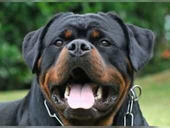 Hunde In Oder Um Hamburg Kaufen Verkaufen Deinetierwelt