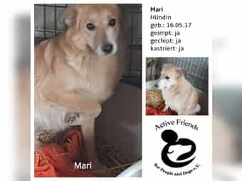 Mari - Zuhause gesucht