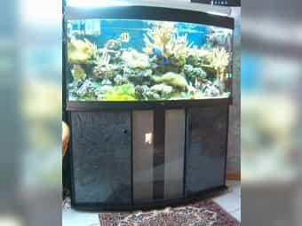 Komplettes Salzwasseraquarium ca 290l