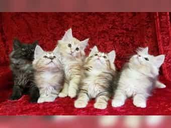 Wir erwarten süsse Kitten vom