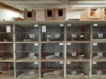 Kaninchenstall Firma Weiss