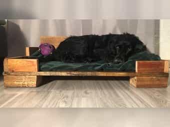 Hundebett aus robusten Holz