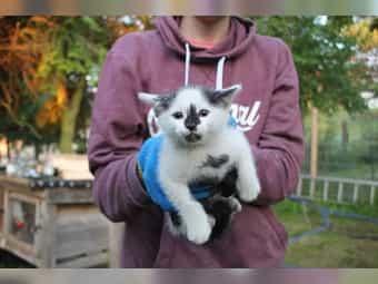 Katzenbaby Katzen Kitte