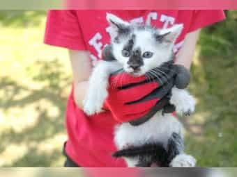Katzenbaby Junge Katze