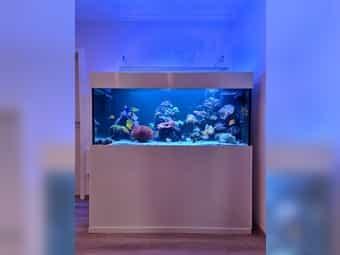 Meerwasseraquarium 750 Liter Triton-Methode