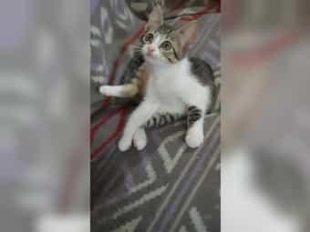 Süßes Kitten Talita aus dem