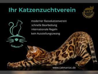 Der moderne Rasse-Katzenverein für seriöse