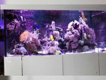 Meerwasser Aquarium 700 l