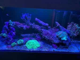 Meerwasser-Aquarium Inhalt Komplett 250L