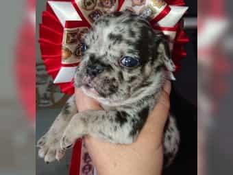 Hunde In Oder Um Berlin Kaufen Verkaufen Deinetierwelt