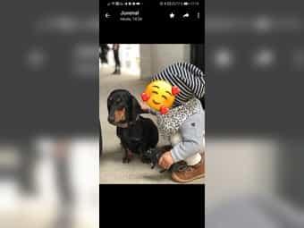 Hunde In Nordrhein Westfalen Online Kaufen Verkaufen Deinetierwelt