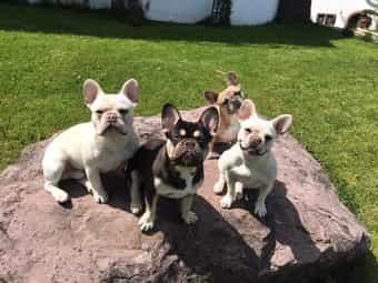 Hunde In Baden Wurttemberg Online Kaufen Verkaufen Deinetierwelt