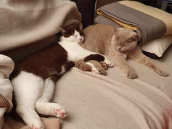 Katze Wurf Kleinanzeigen Kaufen Verkaufen Bei Deinetierwelt