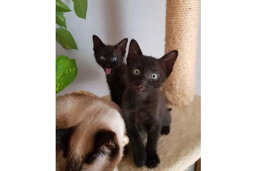 Katzen Stubenrein Kleinanzeigen Kaufen Verkaufen Bei Deinetierwelt