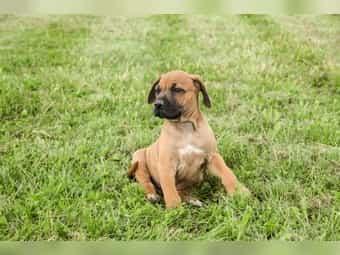 Hunde In Thuringen Online Kaufen Verkaufen Deinetierwelt