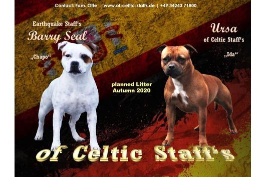 Staffordshire Terrier Welpen Im Tiermarkt Von Deinetierwelt