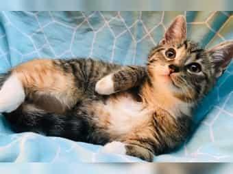 Liebe Kätzchen Katzenbabys suchen ihr