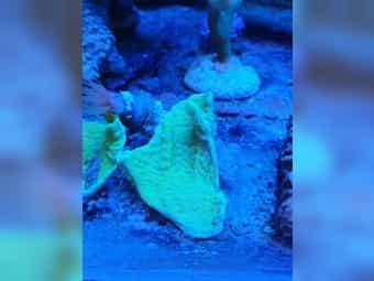 Verschiede Korallen Ableger