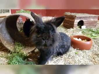 Kaninchen Altersheim Gnadenhof Endplätze frei