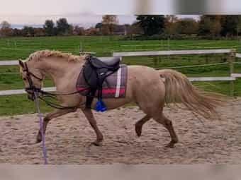 Mädchenpony Kinder Tunier Familien Pony