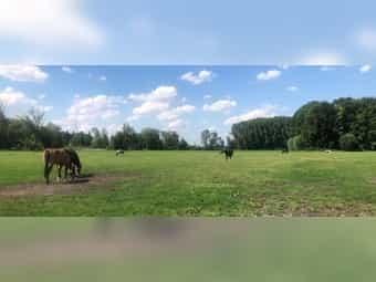 Pflegebeteiligung für 3 Pferde