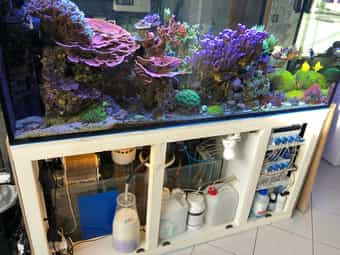 Meerwasser Aquarium High-Tech