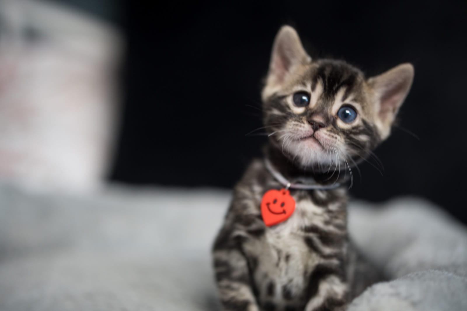 Kitten Hamburg